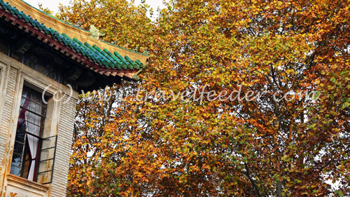 Autumn in Nanjing