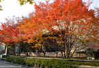 Autumn colours of Higashiyama